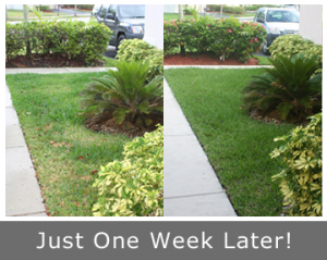 our Gaithersburg Sprinkler Repair team can fix a lawn in a week